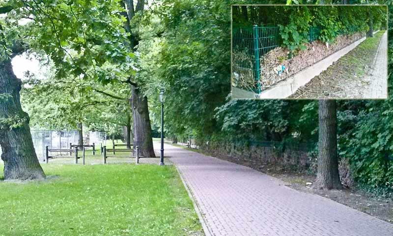 Gegenüber dem Bauzaun zeigen weiträumige Ablagerungen von Treibgut im Zaun des Bernburger Tiergartens die Strömungstätigkeit in diesem Bereich an. Hier wird die Strömung vom Wehr in den Altarm gedrückt. Foto vom 30.06.2013.