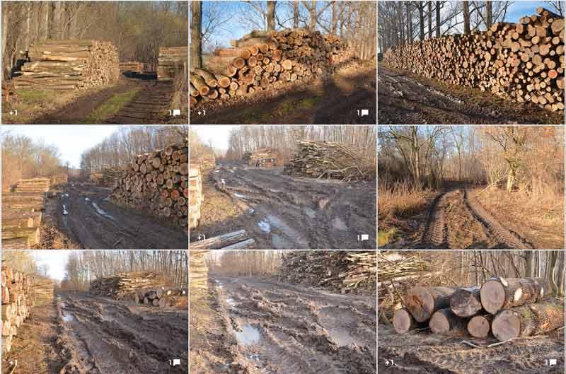 Siegfried Walter hat eine kommentierte Google-Fotogalerie erstellt. Dort kann man sich ein eigenes Bild über die Situation über den Pfuhl'sche Busch bei Kustrena machen.